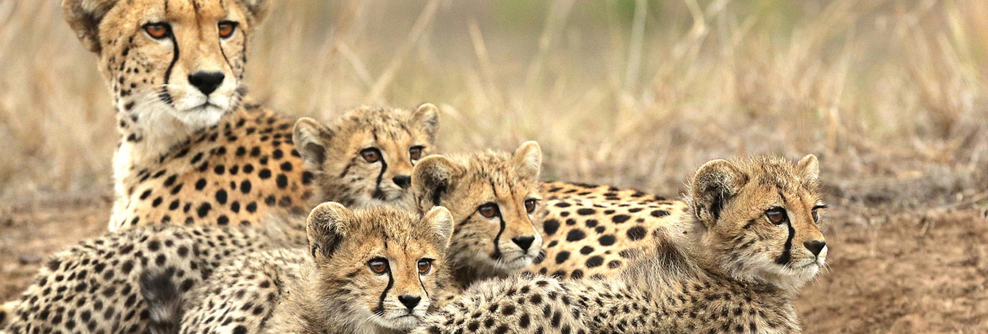 World-class wildlife sightings